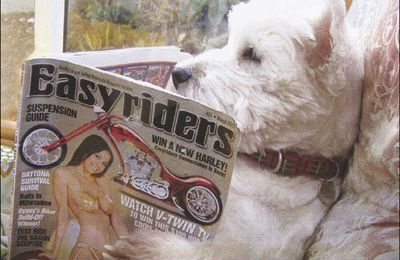 Humour : reader-rider dog, tribute to Easyriders magazine