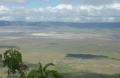 Augmentation au Ngorongoro en 2015