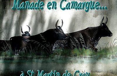 Manade en Camargue...