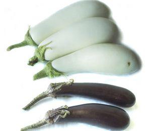 l'aubergine blanche