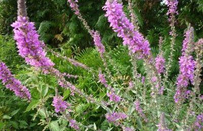 Protéger nos plantes du froid