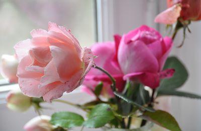 Je dis : une fleur ! (2)