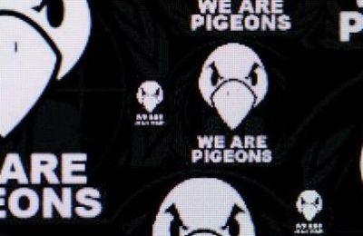 Un rêve de Pigeons: une start-up de 2 jours se fait racheter 134 millions d'euros.