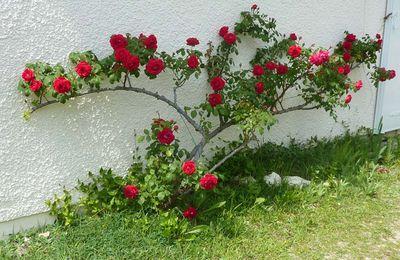 Dans mon jardin, il y a (3) ...