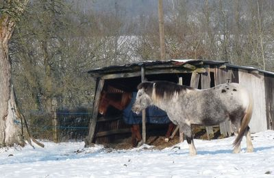 Journal de Poupoutland Février 2012