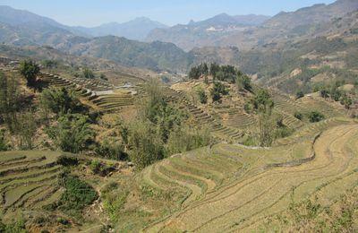 Trek jusqu a Ta Van a travers les rizieres
