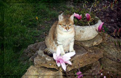 Mon Chat Beauté