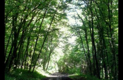 Sous Bois et Lumière