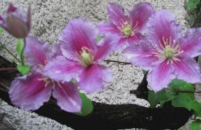 jour des fleurs...