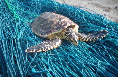 Une tortue de Mayotte aux Barren