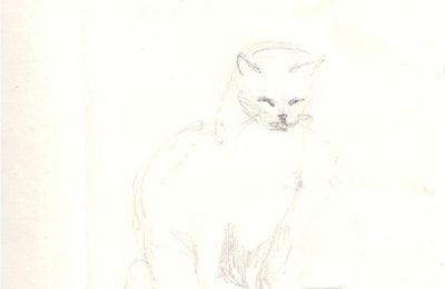 croquis de chats (7)