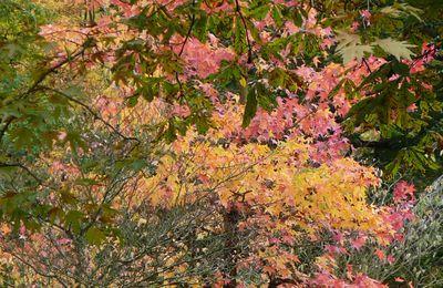 ...automne...