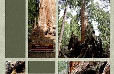 Sequoia Forest...