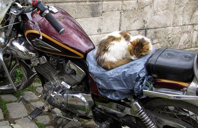 A cosa serve una moto ...