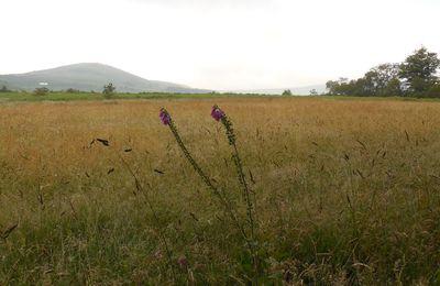 Sur les sentiers de la drosera rotundifolia