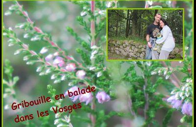 bientot à découvrir , les Vosges et ses environs