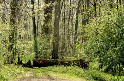 L'Ill*Wald