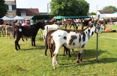 Trois jours festifs autour de l'âne à Lignières