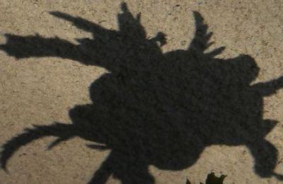 L'ombre du Général Hiver x
