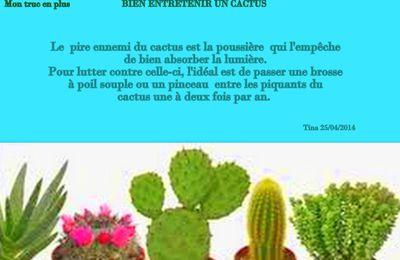 Bien entretenir un cactus - Mon truc en plus.... sans vous piquer