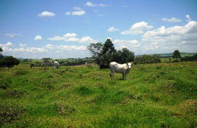 Curitiba et Morretes