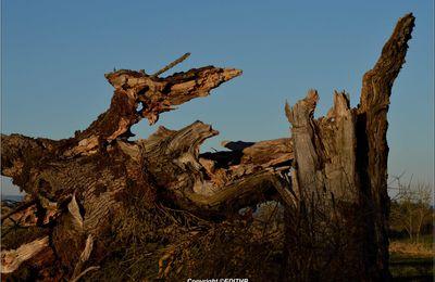 un arbre brisé en deux