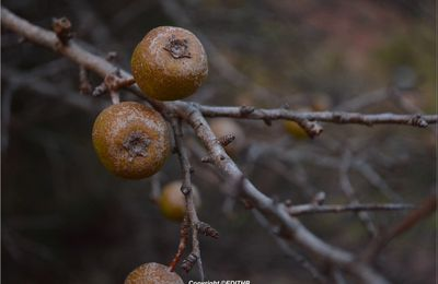FRUITS EN AUTOMNE