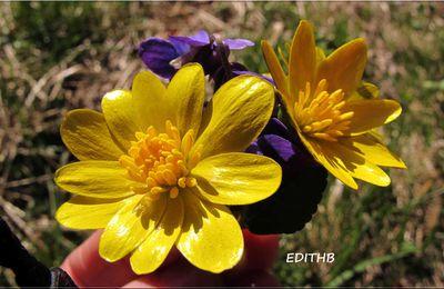 Un petit bouquet de fleurs du début de printemps en aveyron - flowers
