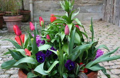 Planter des tulipes l automne pour en profiter au printemps les conseils de jardin de vavou - Bulbes a planter au printemps ...