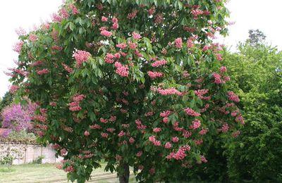 Choisir et planter un arbre : quelles implications ?