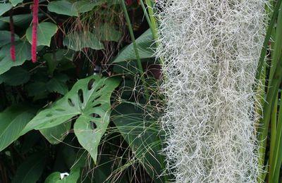 Univers végétal au sein de la maison : esthétique, bien-être et santé