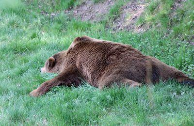 Descente de lit en peau d'ours