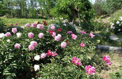 Jardins, vergers, fleurs et fruits...