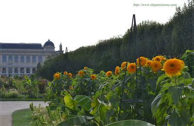 La photo du weekend : Soleils du Jardin des Plantes