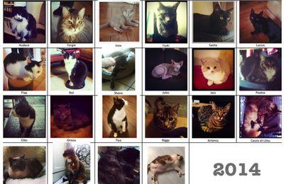 Les beaux chats de 2014