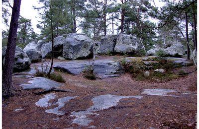 forêt de Buthier