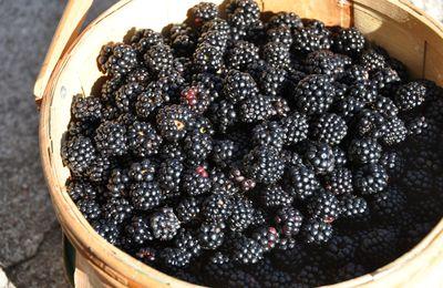 Les mûres sont mures - Rubusberoj maturiĝis