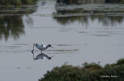 Miroir aux oiseaux (8 photos)