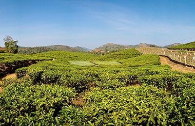 Le Kerala & ses paysages