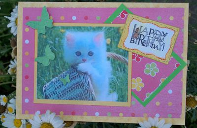 carte le petit chat