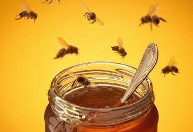 Du miel en dessous du sapin? Pourquoi pas?