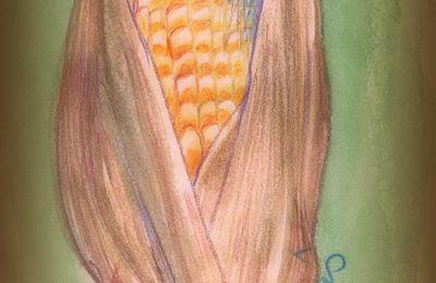 Pour le maïs, j'ai oublié de vous dire…