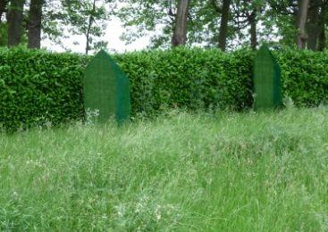 Un brin d'herbe aux dimensions de mes rêves