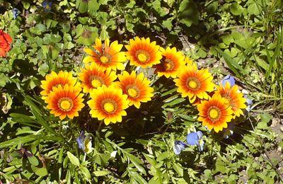 Fleurs d'été - Les annuelles