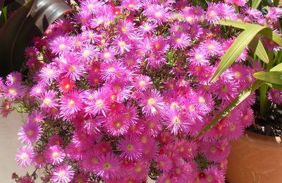 305- Fleurs de saison
