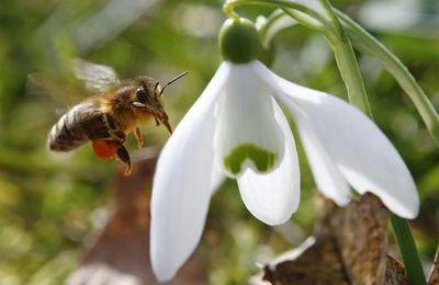 Greenpeace cible sept pesticides dangereux pour les abeilles.
