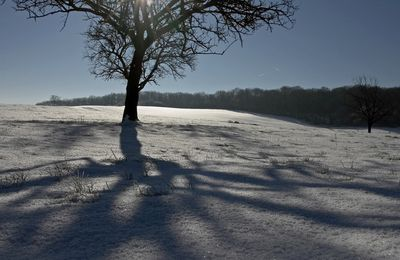 Traces et empreintes sur la neige: Sur la piste du blaireau…