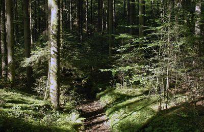 Loups Vosgiens : Le retour du loup dans les Vosges. Débat de La Voix est Libre sur France 3 Alsace ! Une démonstration d'insuffisances