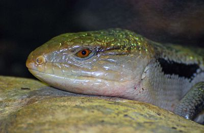 Portaits de Zoo: Les Reptiles