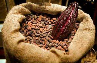Abengourou / Fuite du cacao au Ghana : Accusé, Bilé Bilé, président d'une union de coopératives se défend